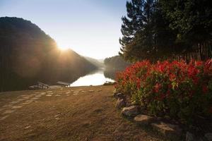 coucher de soleil contre le lac et la pinède. photo