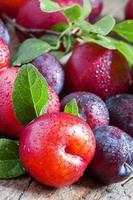 prunes bleues et rouges mûres photo