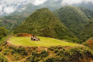 rizière avec roche
