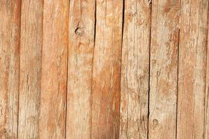 texture d'arbre photo