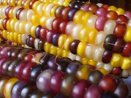 maïs indien 3