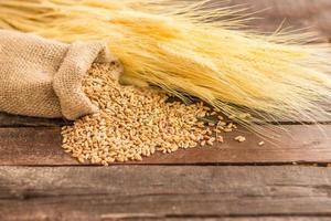 graines de blé photo