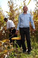agriculteurs à la récolte de maïs photo
