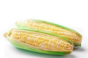 maïs sucré, bicolore