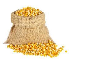 maïs dans le sac
