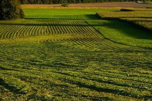 récolte de foin en automne