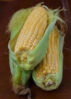 jeunes épis de maïs photo