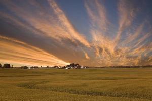 Coucher de soleil sur le champ de maïs de l'Iowa photo