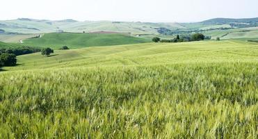 champs de maïs photo