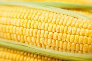 macro de grains de maïs