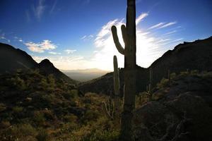coucher de soleil dans le désert photo