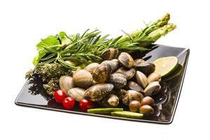 mollusque espagnol - almeja photo