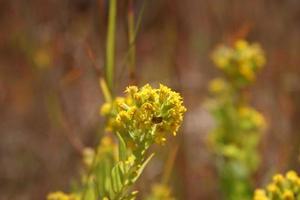 fleurs jaunes photo