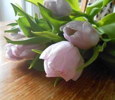 acercamiento a tulipanes sobre mesa de madera photo