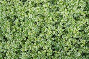herbe au sol