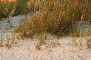 dunes dans la lumière du soleil en fin de journée photo