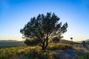 arbre solitaire au coucher du soleil photo