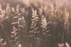 lumière d'été photo