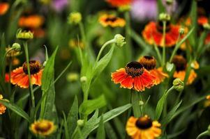 fleur de fin d'été photo