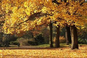 jesień photo