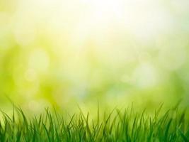 herbe de printemps photo