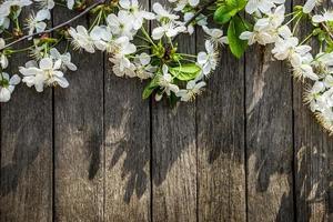 fond de printemps photo