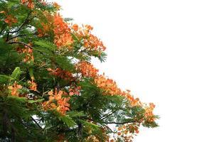 feuilles de printemps