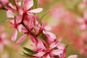 fleurs de printemps photo