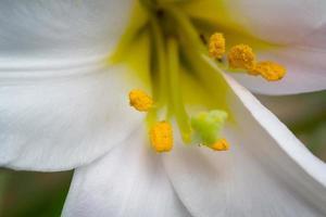 fleur de printemps photo