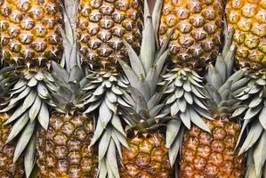 ananas photo