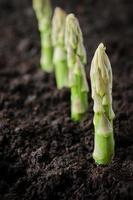 asperges de l'agriculture biologique photo