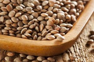 lentilles brunes biologiques sèches