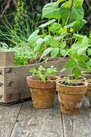 les plantes photo