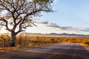paysage africain photo