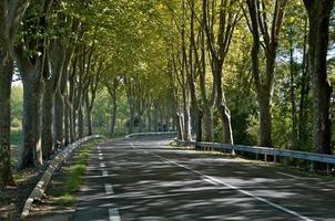 paysage de ruelle d'arbre