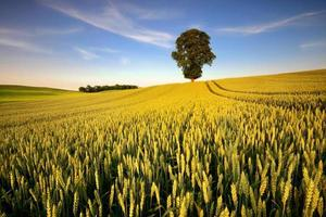 paysage verdoyant photo