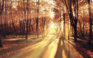 rayons de lumière tombent paysage arbres photo
