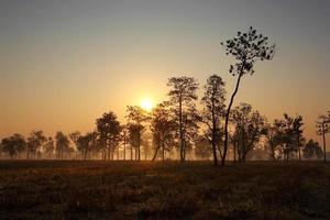 paysage dans la lumière du matin