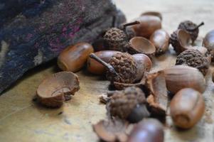 glands d'automne photo