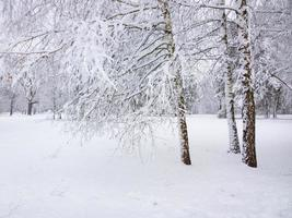 forêt d'hiver.