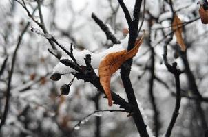 dégel hivernal