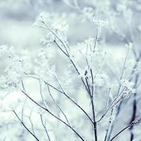 fond d'hiver photo