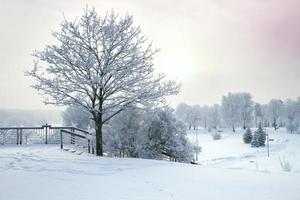 forêt d'hiver photo