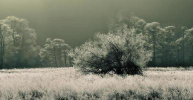 matin d'hiver. photo