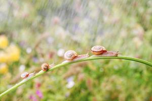 escargot photo