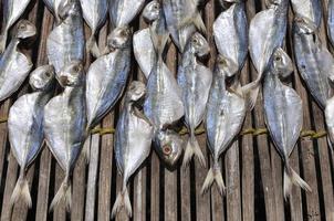 rang de poisson salé sec sous le soleil photo