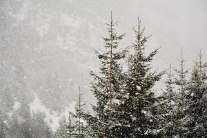 chutes de neige en hiver