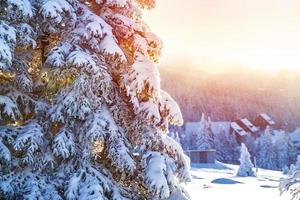 hiver dans les montagnes photo