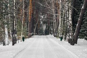 hiver dans le parc polenovo