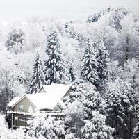 forêt d'hiver avec de la neige